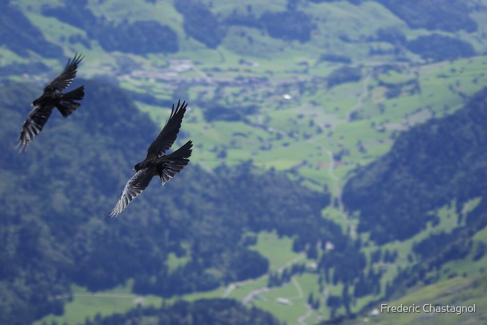 Birds Säntis Switzerland by Frederic Chastagnol