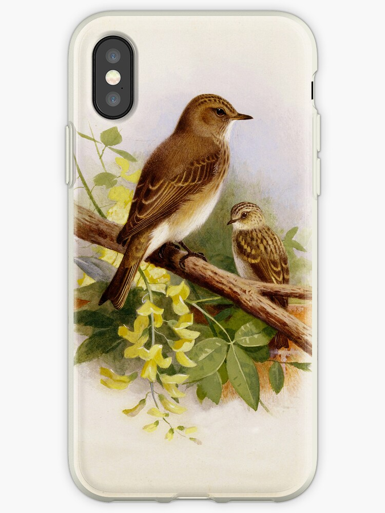 Birds perched Together iPhone Case by Pamela Phelps