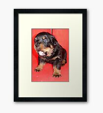 Rottweiler Puppy Howling For Attention Framed Print