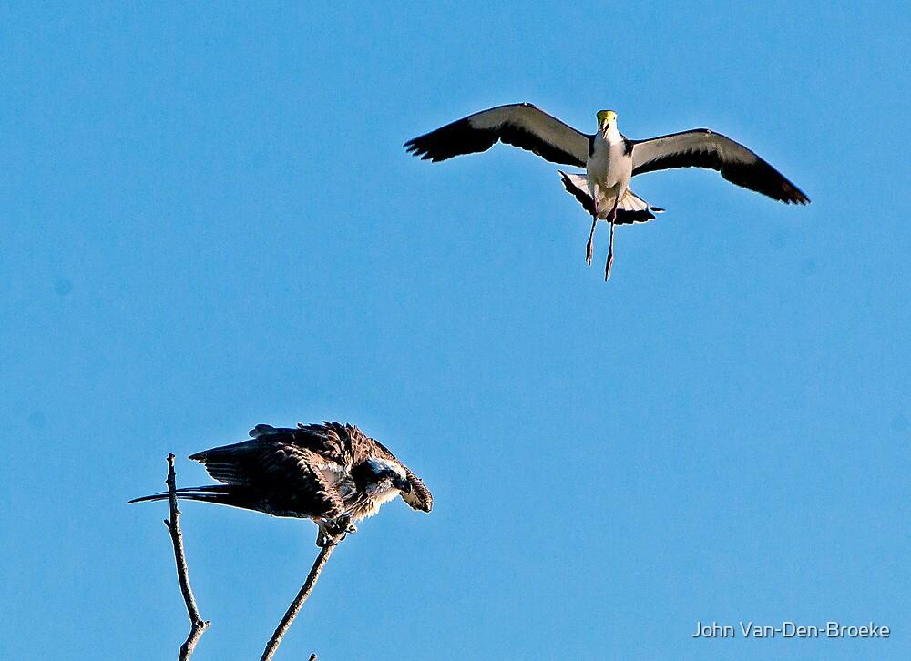 Plover and Osprey by John Van-Den-Broeke