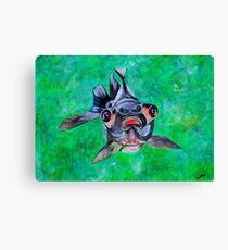 Blackmoor Goldfish Canvas Print