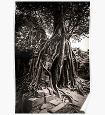 Tree grows out of the ruin of Ta Som, Angkor Poster