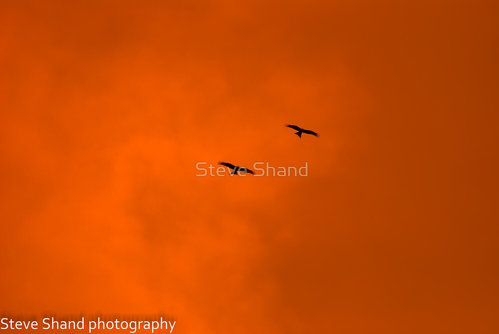 red kites sunset sillouette by Steve Shand