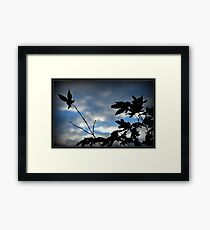 Evening Silouettes Framed Print