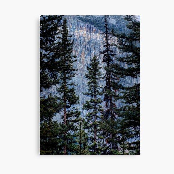 Pines at Lake Lousie, Banff, Alberta Canada Canvas Print
