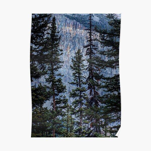 Pines at Lake Lousie, Banff, Alberta Canada Poster