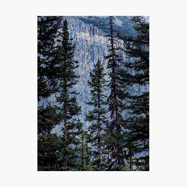 Pines at Lake Lousie, Banff, Alberta Canada Photographic Print