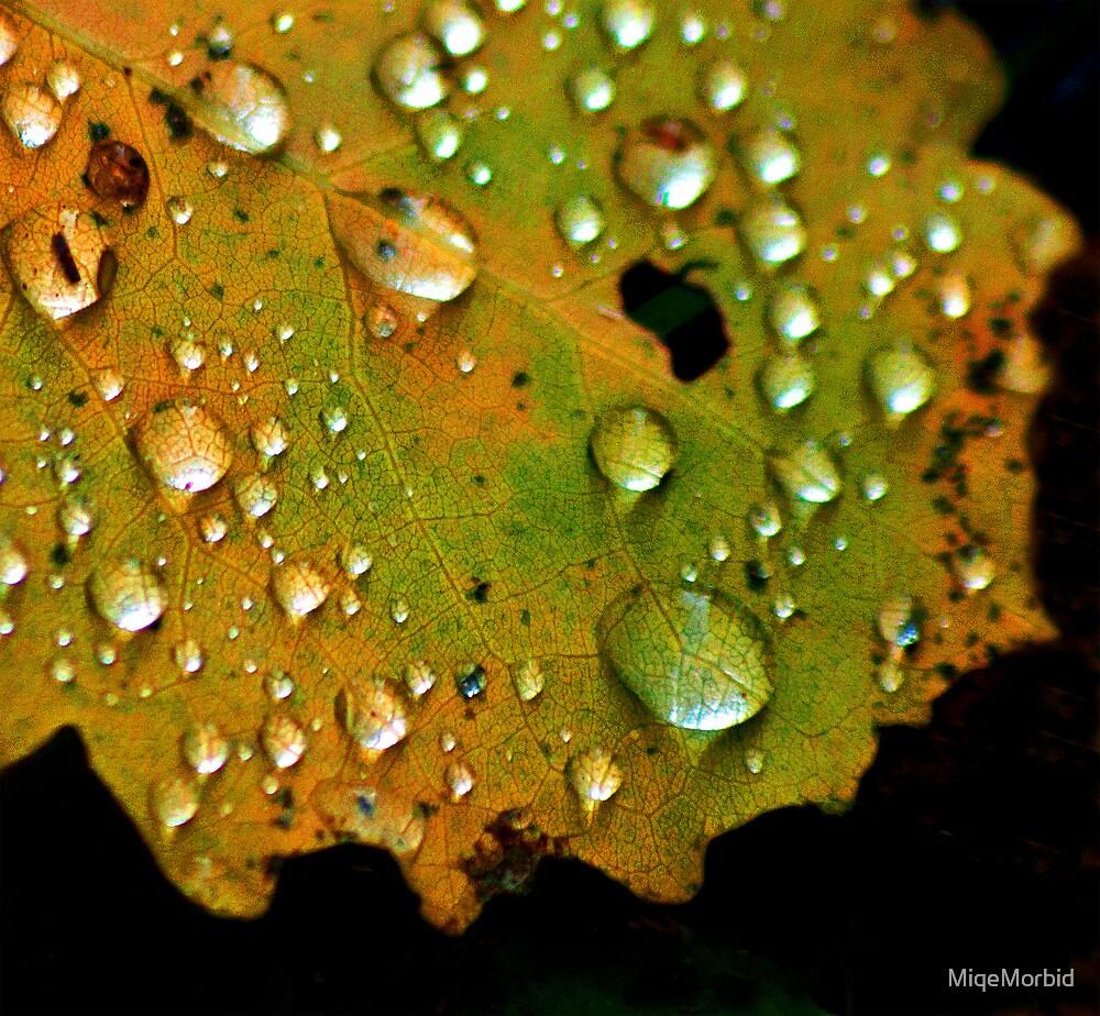 Aspen leaf in autumn, close. by MiqeMorbid