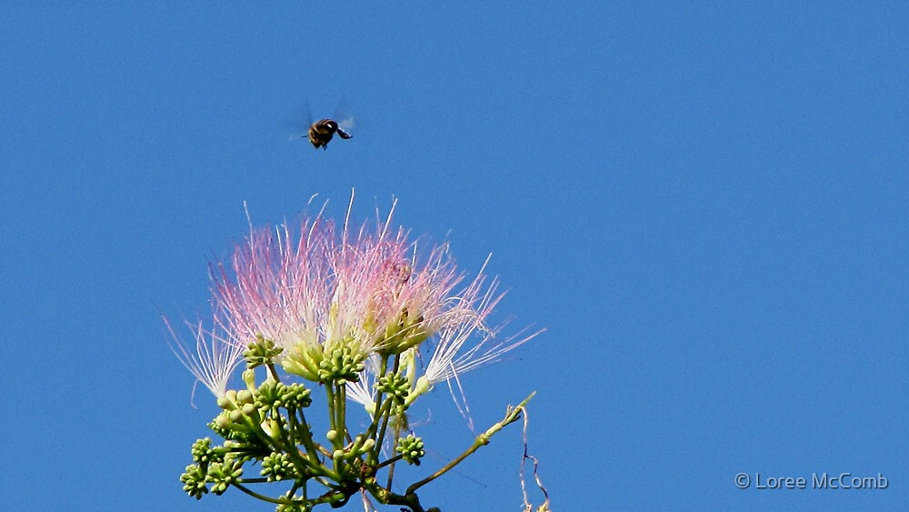 Buzzzzzy Little Bee by © Loree McComb
