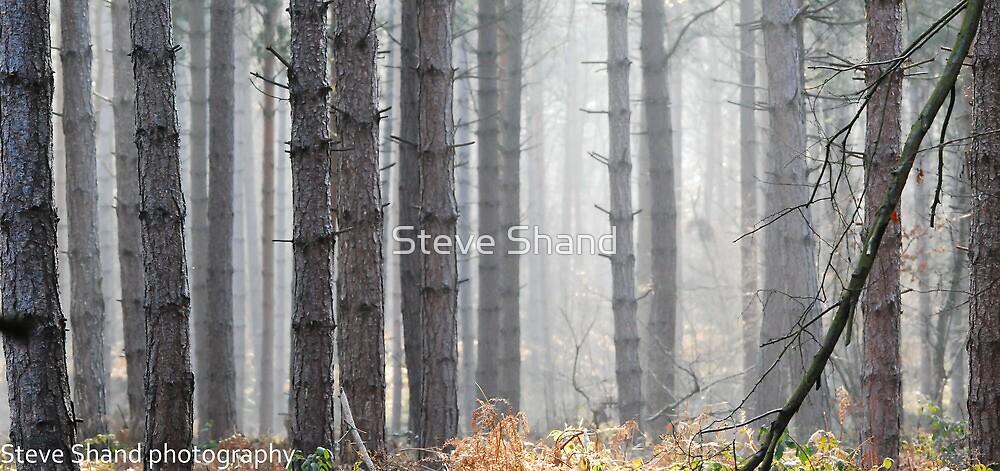 misty woodland by Steve Shand