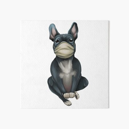 Dog breed French Bulldog in a medical mask. Doctor Art Board Print
