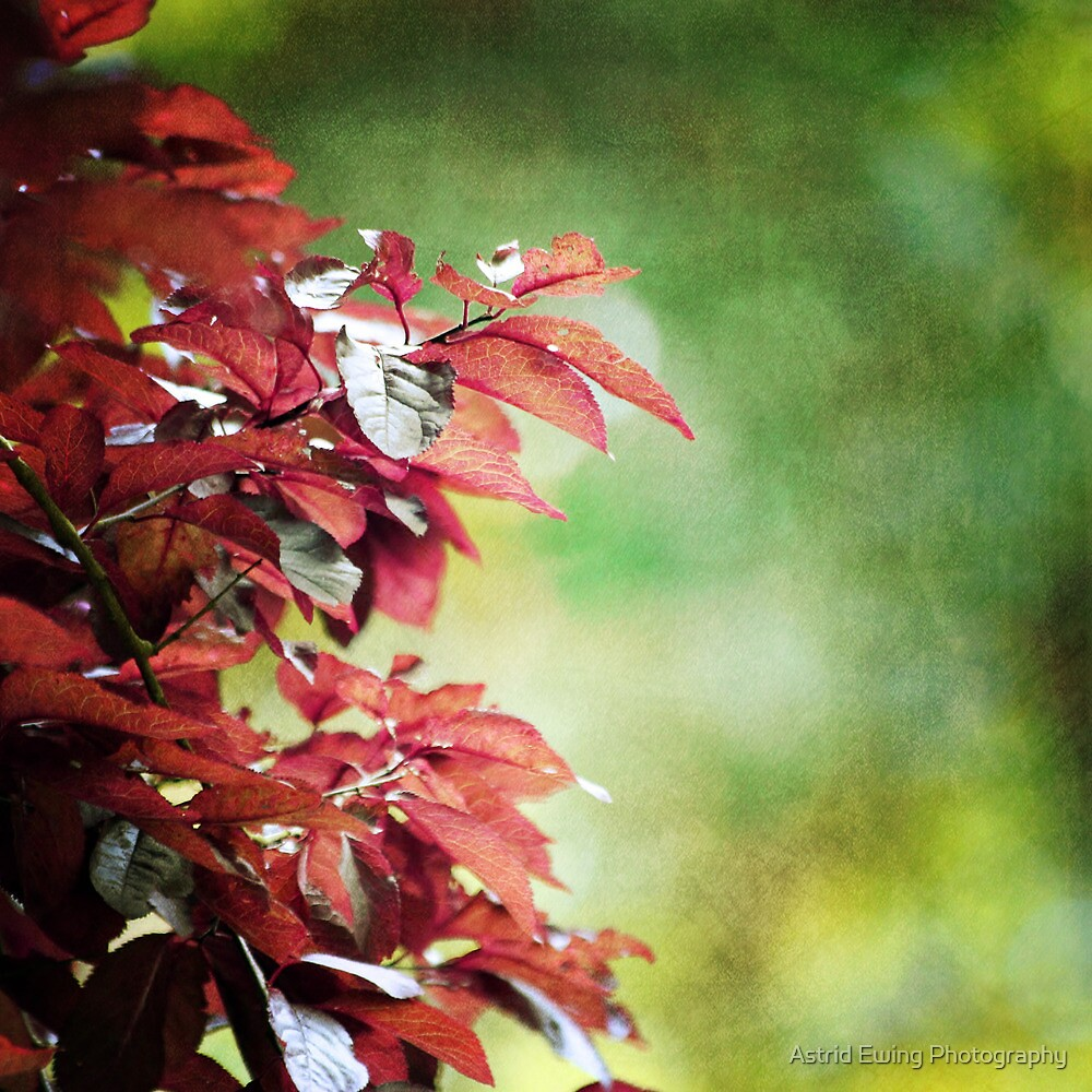 Shades of early Autumn by Astrid Ewing Photography
