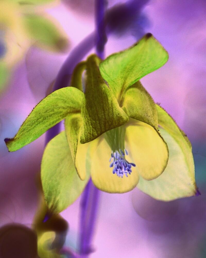 Psychedelic Flower by stevefinn77