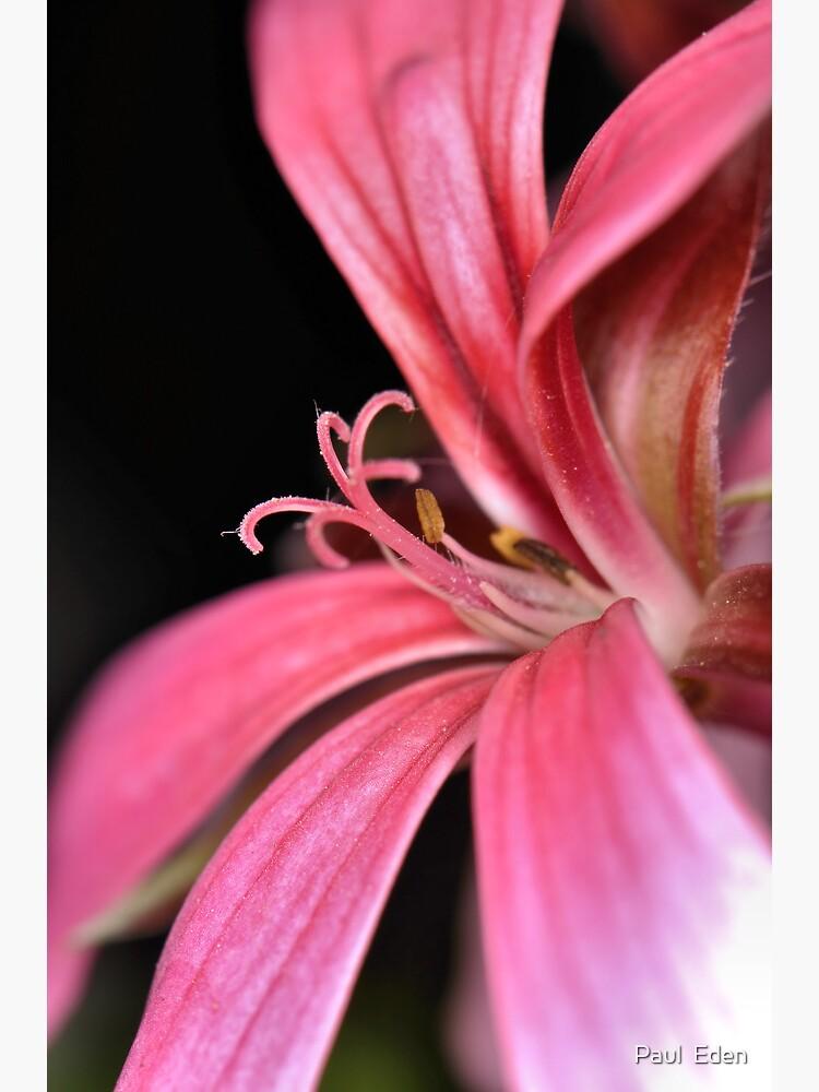 Unknown Flower by pauleden