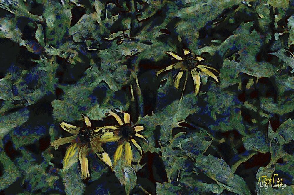 Coneflowers by Lightengr