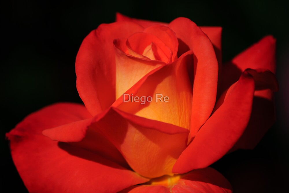 Red Romance by Diego Re