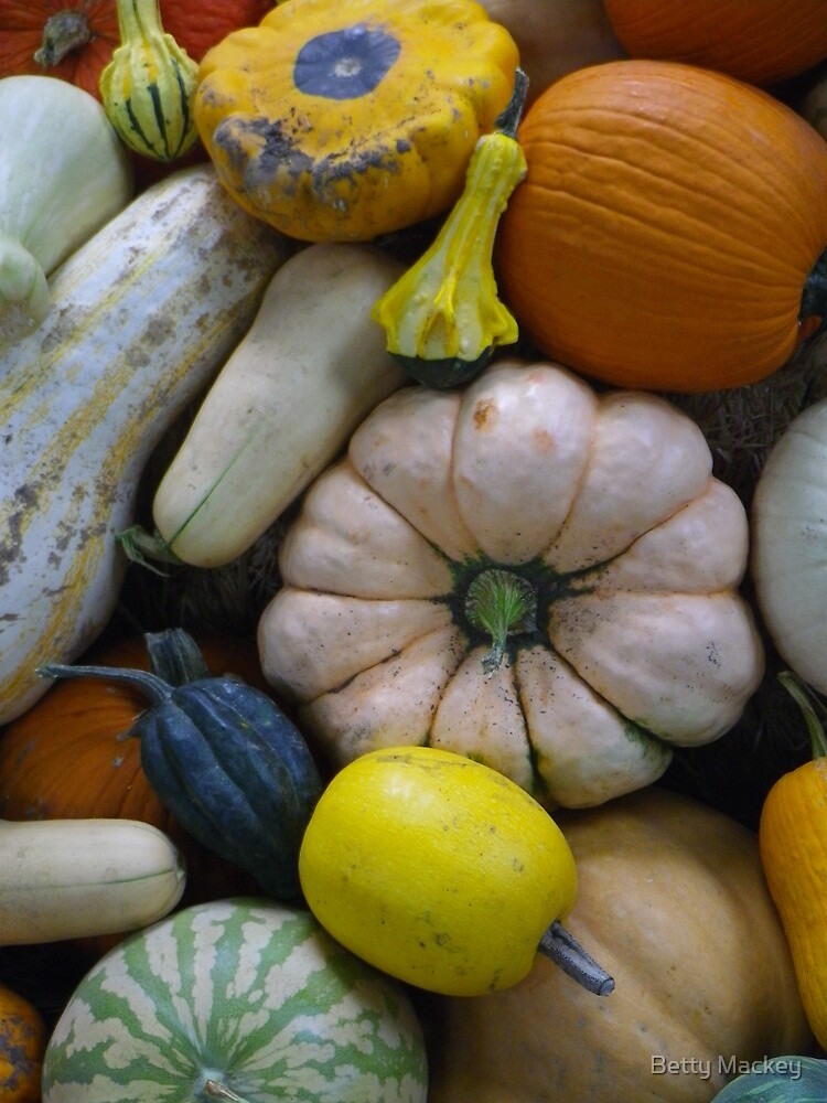 Squashes and Pumpkins by Betty Mackey