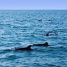 Ocean full of dolphins by georgieboy98