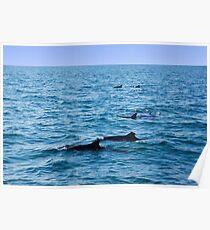 Ocean full of dolphins Poster