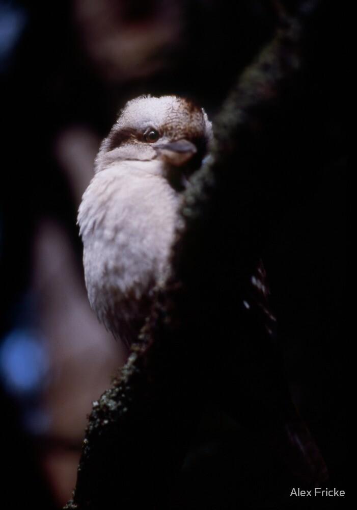 Portrait of a Kookaburra by Alex Fricke