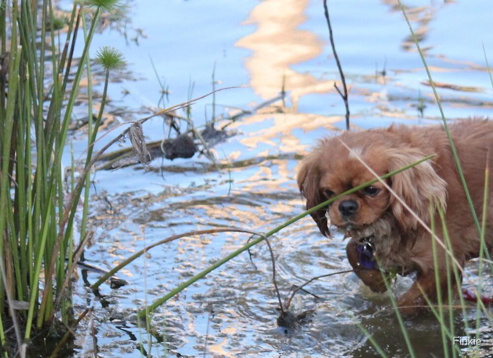 Maybe a Swim by Finkie