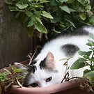 I Think I Have Had Too Much Catnip! *(Please read his story)*  by Heather Friedman
