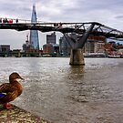 A duck's view of the London Thames, London by Elana Bailey