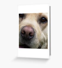 Labrador's Nose Knows... Greeting Card