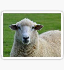 Hello Ewe..........Dorset UK Sticker