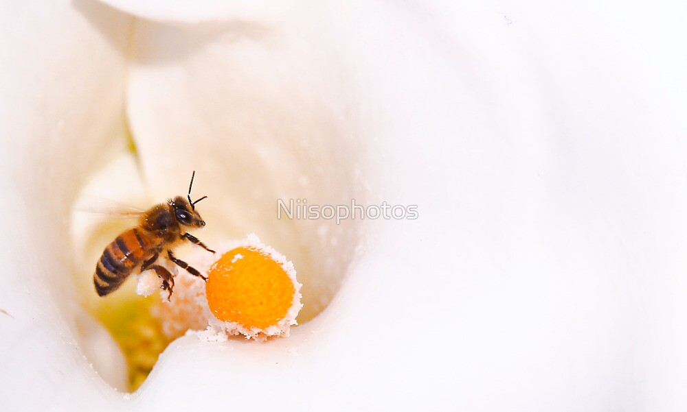 bee found the gold by Niisophotos