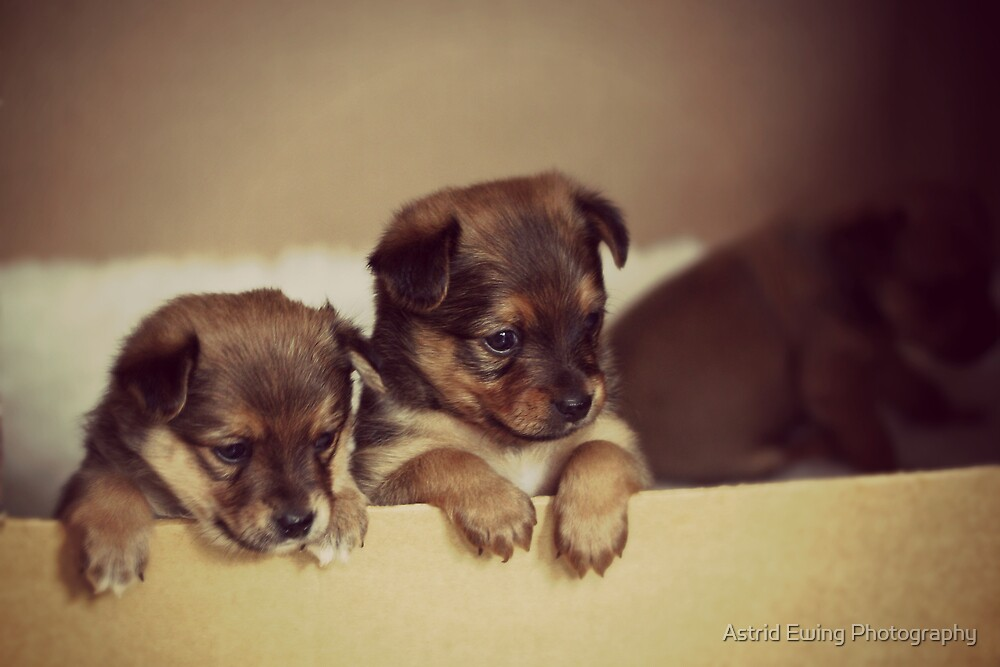 Little Cuties by Astrid Ewing Photography