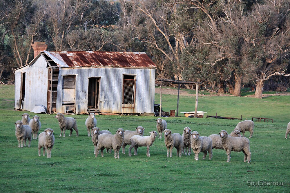 Farm Shed and Sheep by SoulSparrow