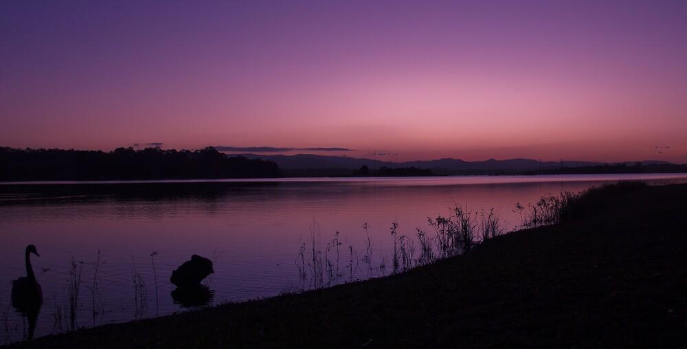 Swan sunset by Johanne Platt