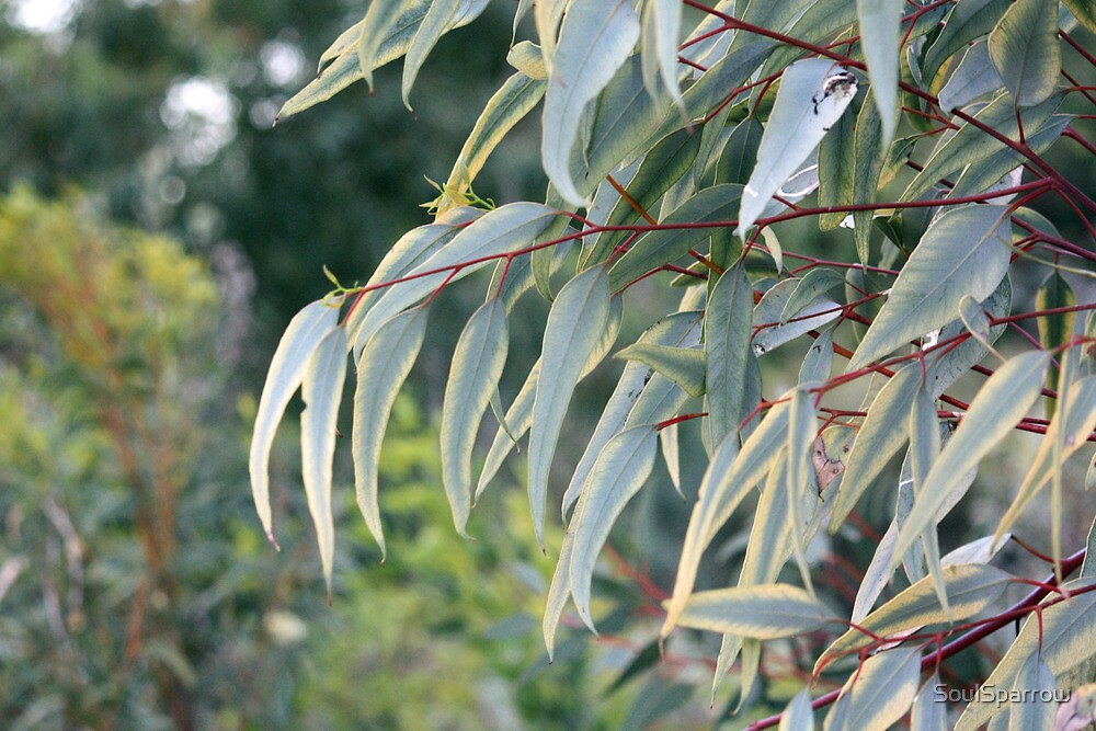 Yellow Tipped Gum Leaves by SoulSparrow