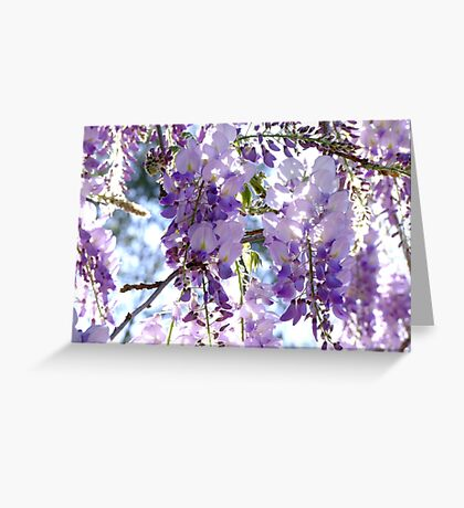 Petals of Wisteria Greeting Card