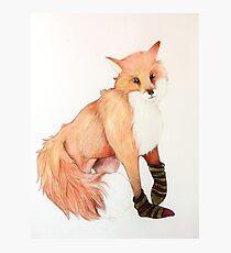 Fox with striped socks Photographic Print