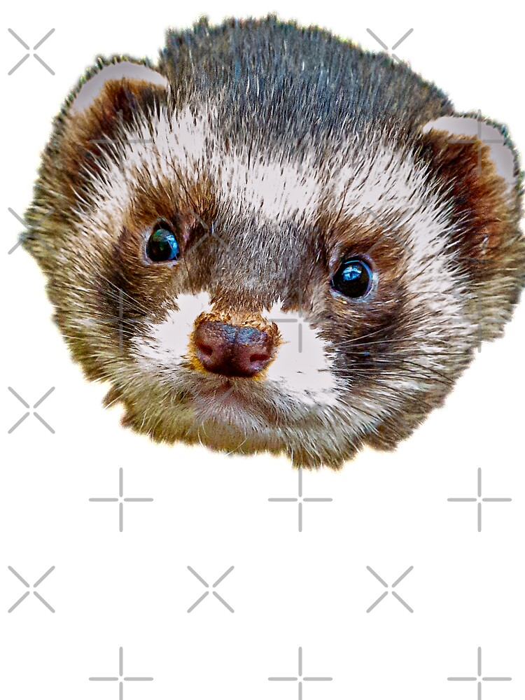 Polecat Face Kids T Shirt By Dalyn Redbubble