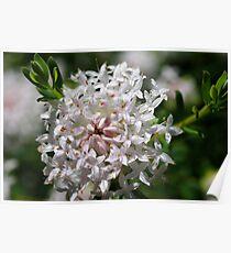 wild flower season again #1 Poster