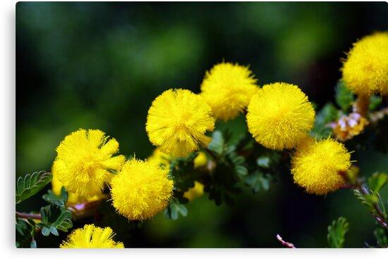 wild flower season again 2 by BigAndRed