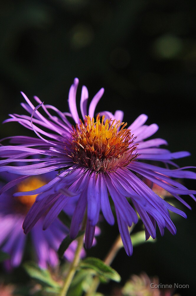 More Purple Passion by Corinne Noon