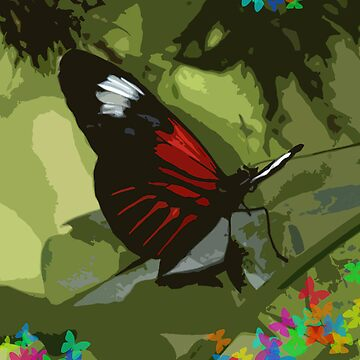 Red Papilio by Papilio