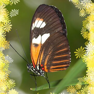 Orange Papilio With Flowers by Papilio