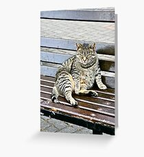 Irish Fat Cat, County Cork, Ireland Greeting Card