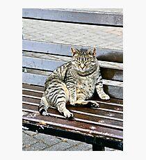Irish Fat Cat, County Cork, Ireland Photographic Print