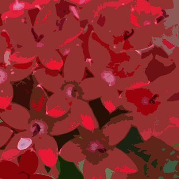 Red Flowers by Papilio