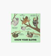 Know Your Sloths Art Board