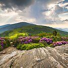 Jane Bald in Bloom - Roan Mountain Highlands Landscape by Dave Allen