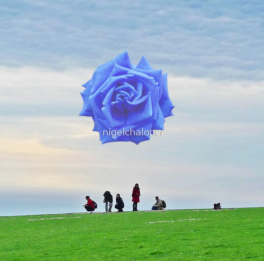 Rose by nigelchaloner
