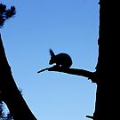 Squirrel Silhouette by Vicki Spindler (VHS Photography)