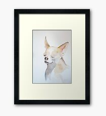 Rocco by Shannon Wright Framed Print